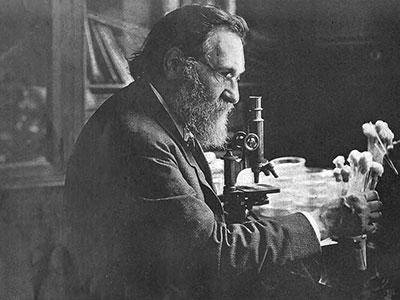professor Elie Metchnikoff