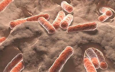 gut bacteria 400