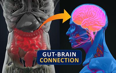 gut brain 400