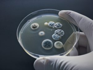 Mold toxicity — the silent factor in chronic illness